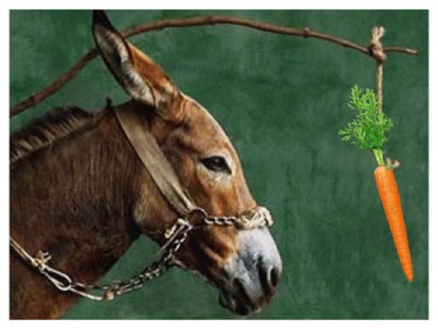 burro-zanahoria